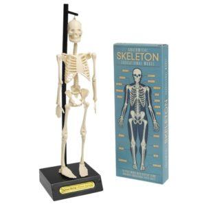 Анатомичен модел на скелет Rex London 24787 (1)