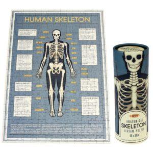 Пъзел в тубус Анатомичен скелет Rex London 28202 (1)